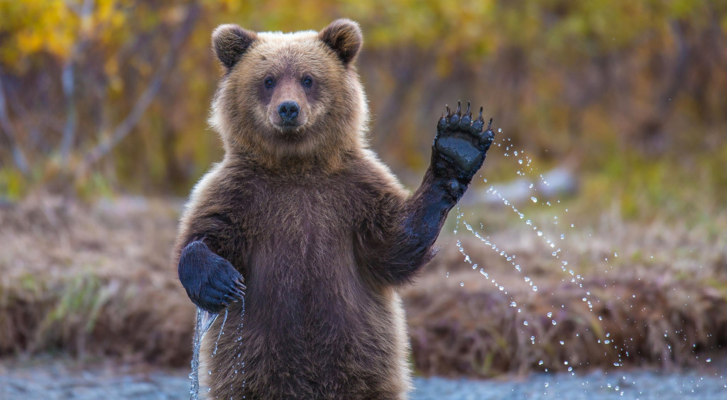 Bear-GettyImages-1208152898-scaled